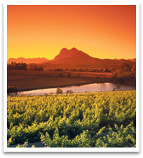 wine_south_africa